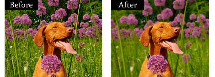 How to blur the background of a photo: before-after
